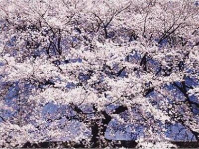Cultivando las raíces de la Sabiduría - Hong Yinming