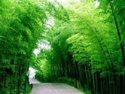 El bambú 竹