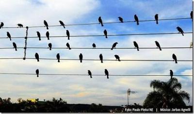 √√√ Los pájaros compositores √√√