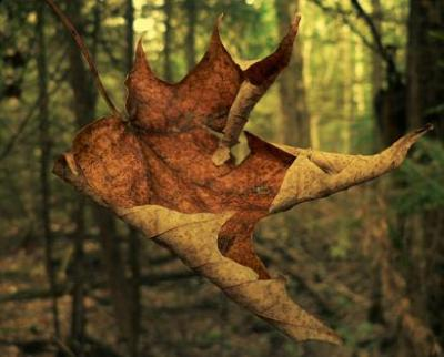 Otoño-Tardor-Autumn-Automne-Herbst-Oсень-Fómhar-Outono-Foghar-秋天
